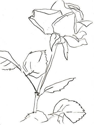 Rose294